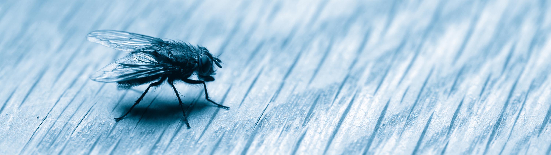 Insektsbekämpning
